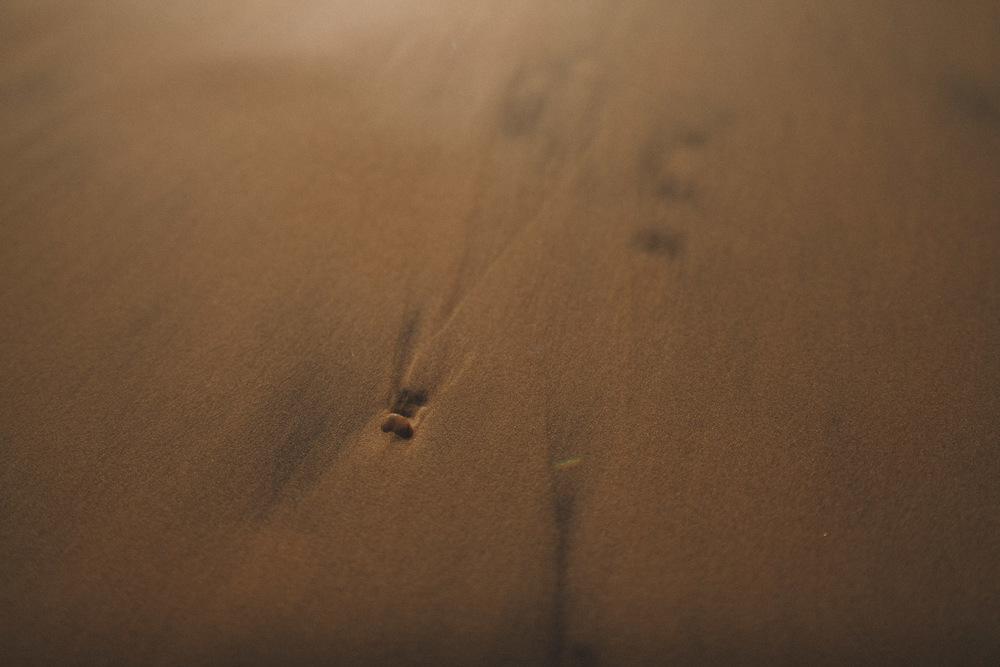 Un petit galet dépassant du sable de la plage.