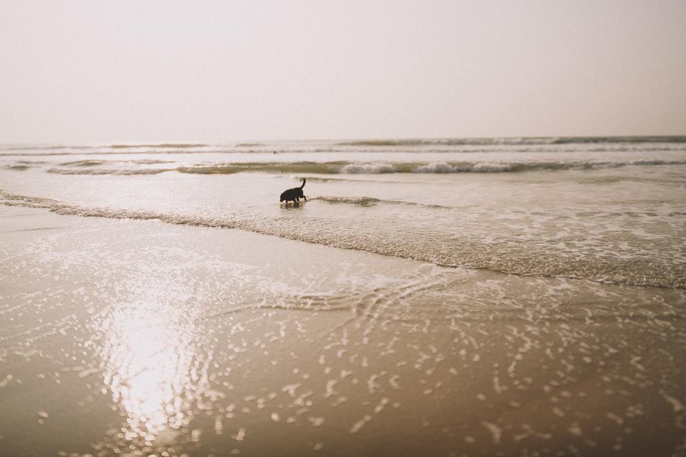 Un chien joue dans les vagues et la plage