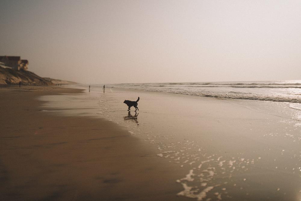Le chien revient sur le sable en courant.