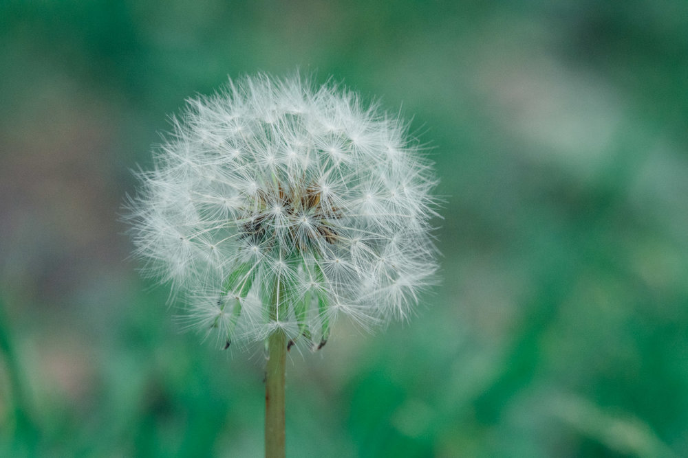 Make a Wish (Sony RX10 III)