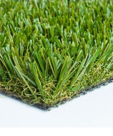 Diamond Light Fescue.JPG