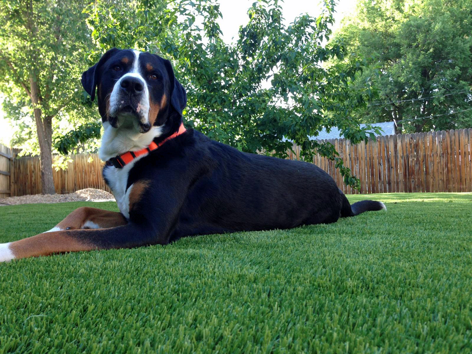 Artificial_Grass_For_Pets.jpg