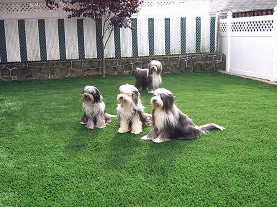 Artificial_Grass_Dog.jpg
