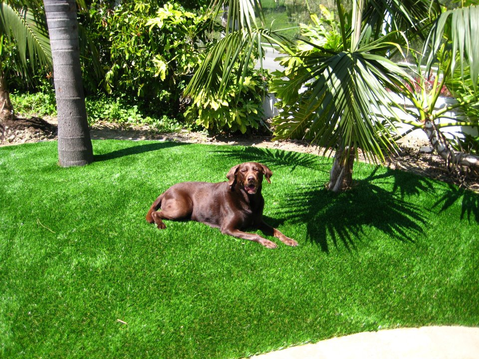 synthetic-grass-for-dogs.jpg