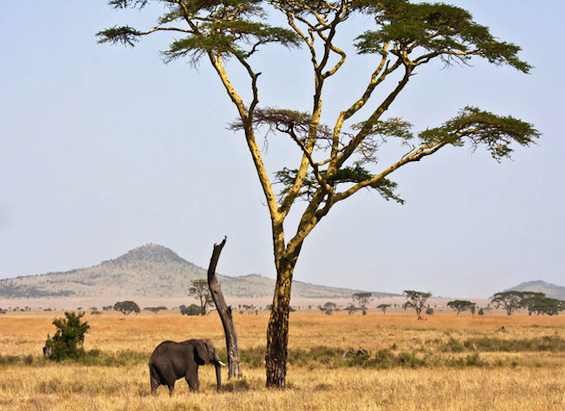 9-day safari adventure through the unique landscapes of Tanzania. Photo courtesy of  National Geographic Private Expeditions .
