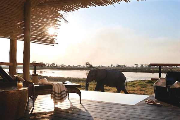 Expect up close and personal wildlife views at the Belmond Eagle Island Lodge.
