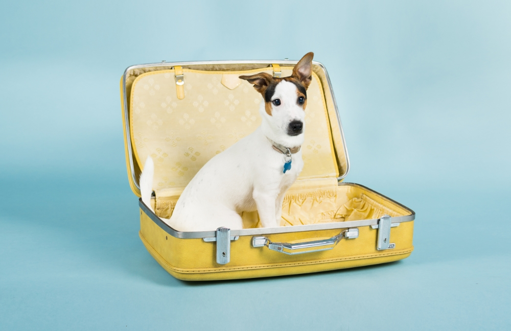 bring-pet-private-jet