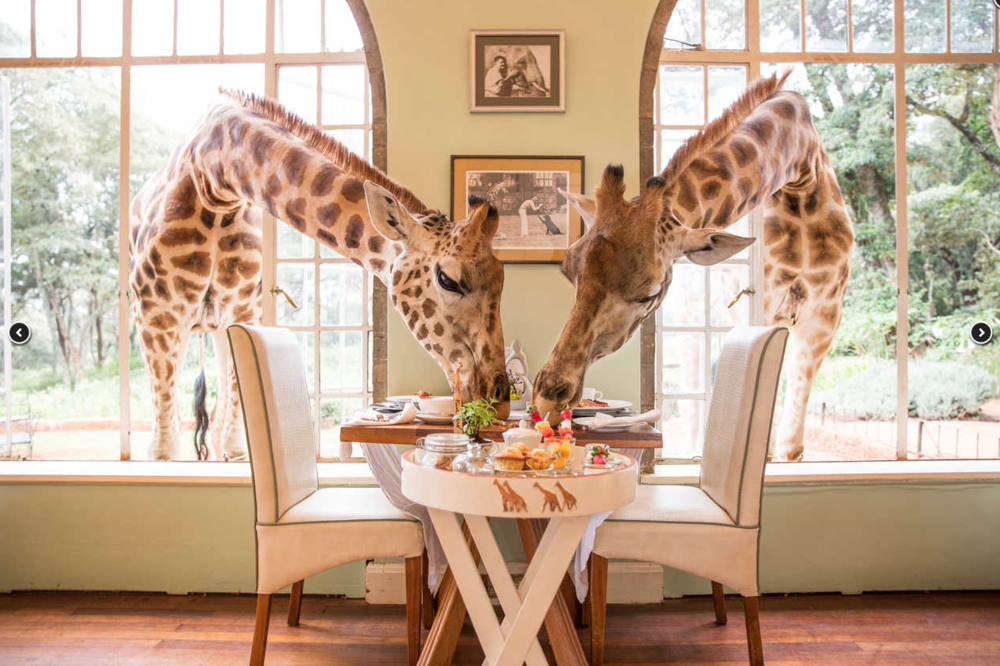Giraffe Manor_15.png