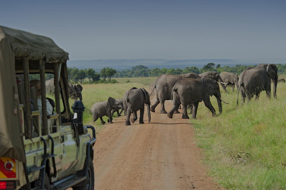 ©TCS_is_african_safari-168252293.jpg