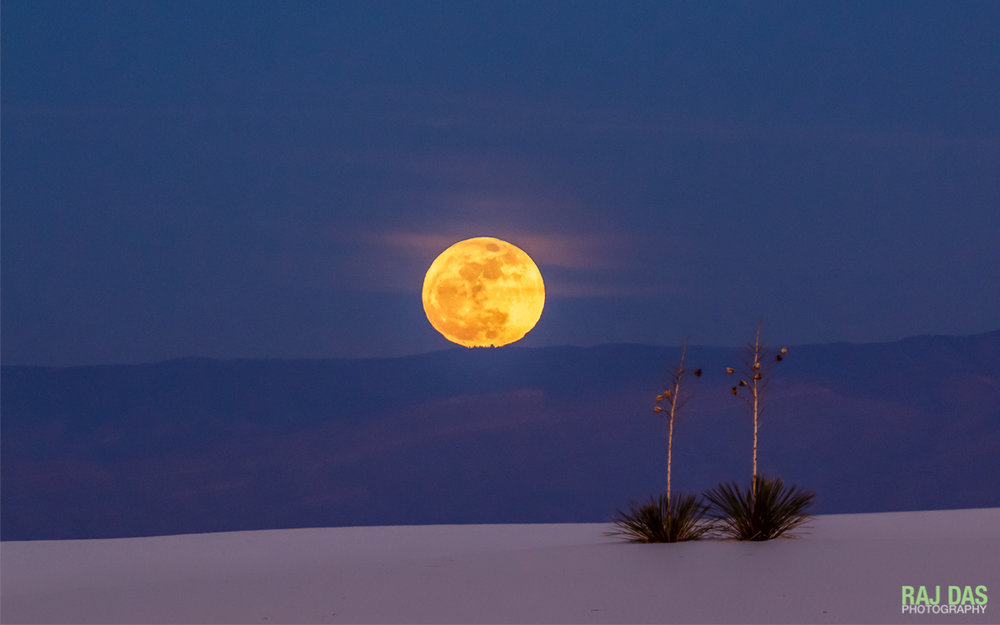 A full moon rises over the Sacramento Mountains and the White Sands National Monument, NM as the setting sun casts a warm glow over the sand and two yucca plants in the foreground.