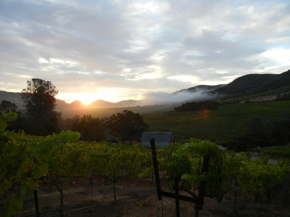 mountain-vineyard.jpg