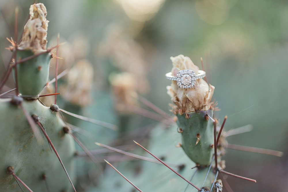 Gorgeous Engagement Ring at JC Raulston Arboretum