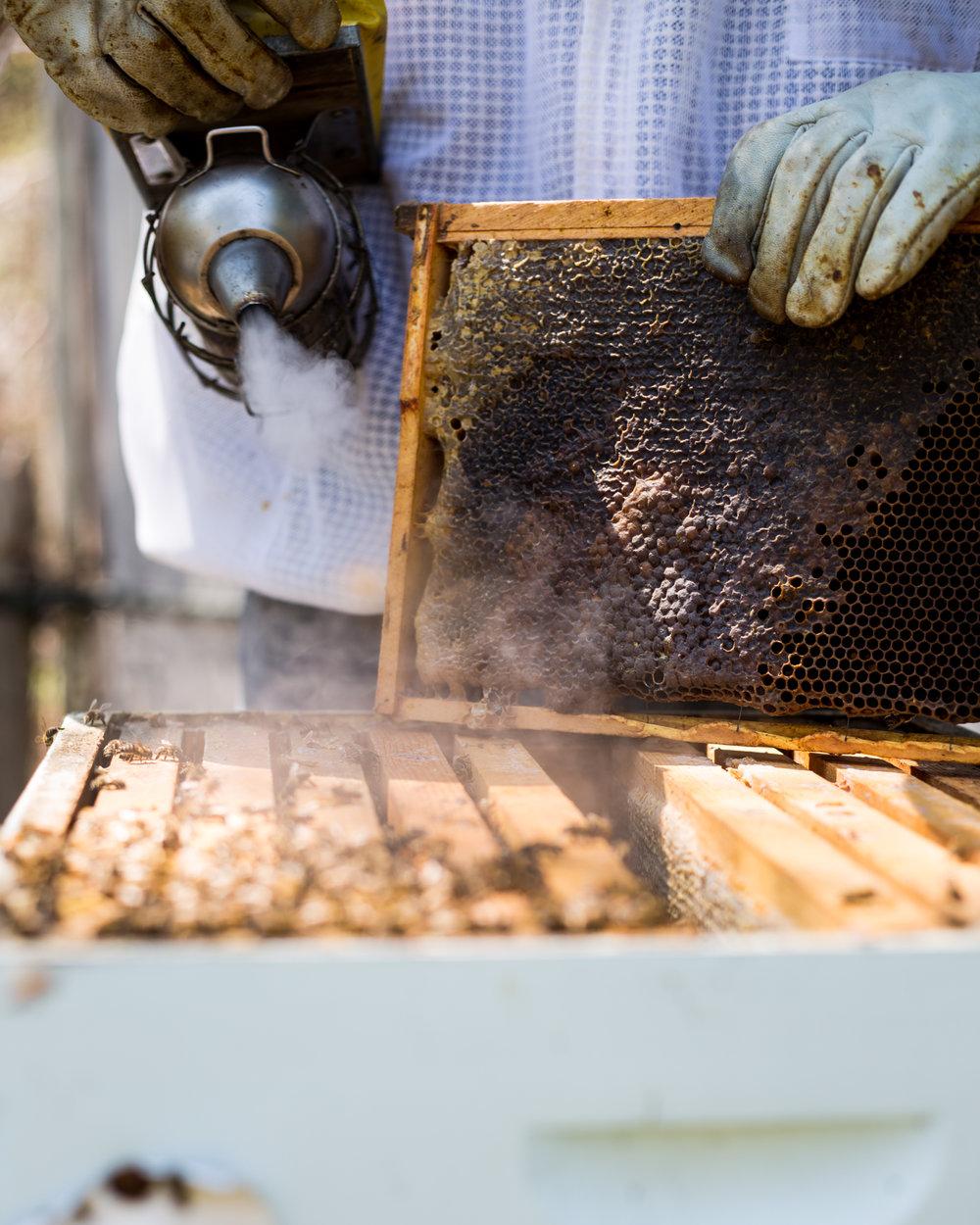 Beekeeper-7.jpg