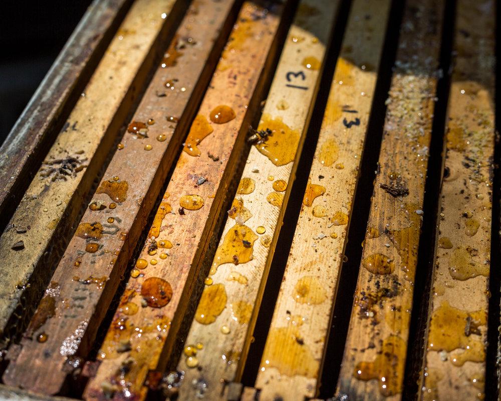 Beekeeper-11.jpg