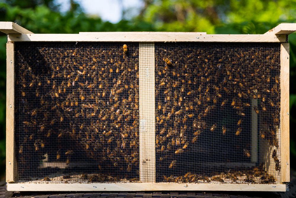 Beekeeper-14.jpg