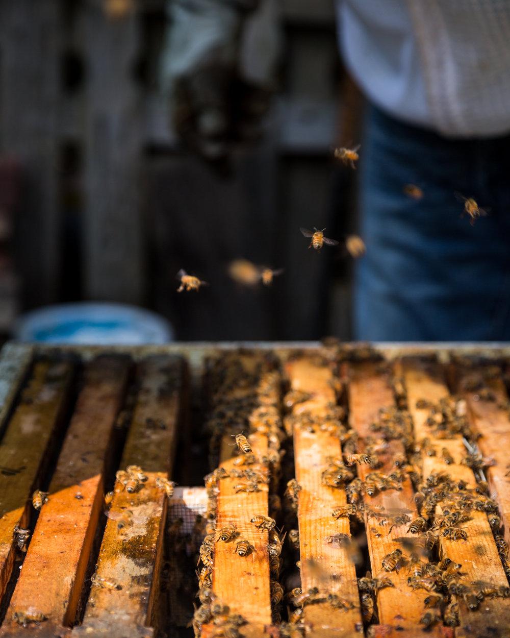 Beekeeper-17.jpg