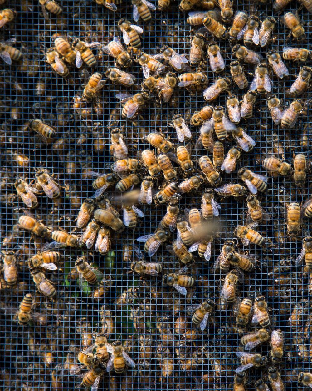 Beekeeper-18.jpg