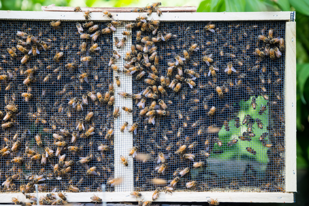 Beekeeper-19.jpg