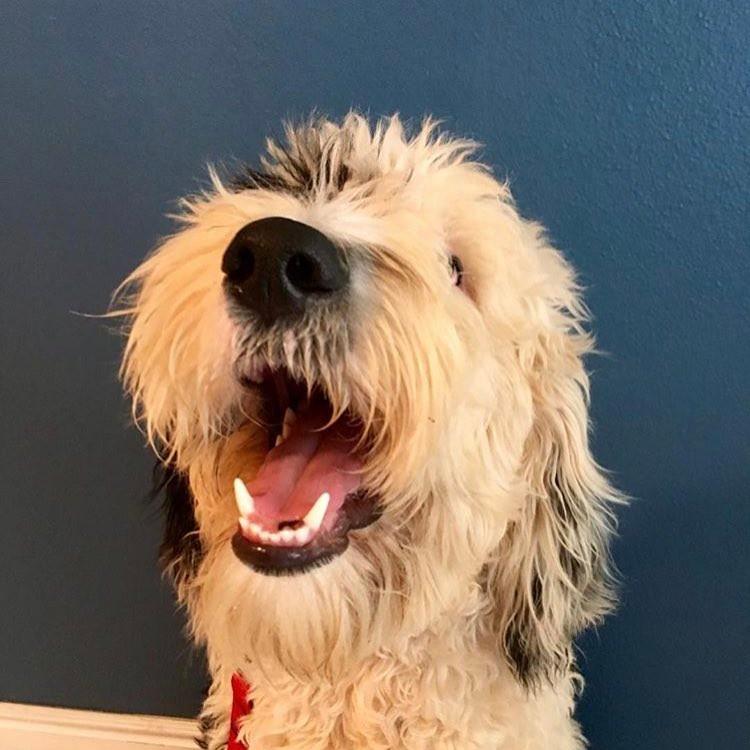 Meet Winston, service dog extraordinaire!