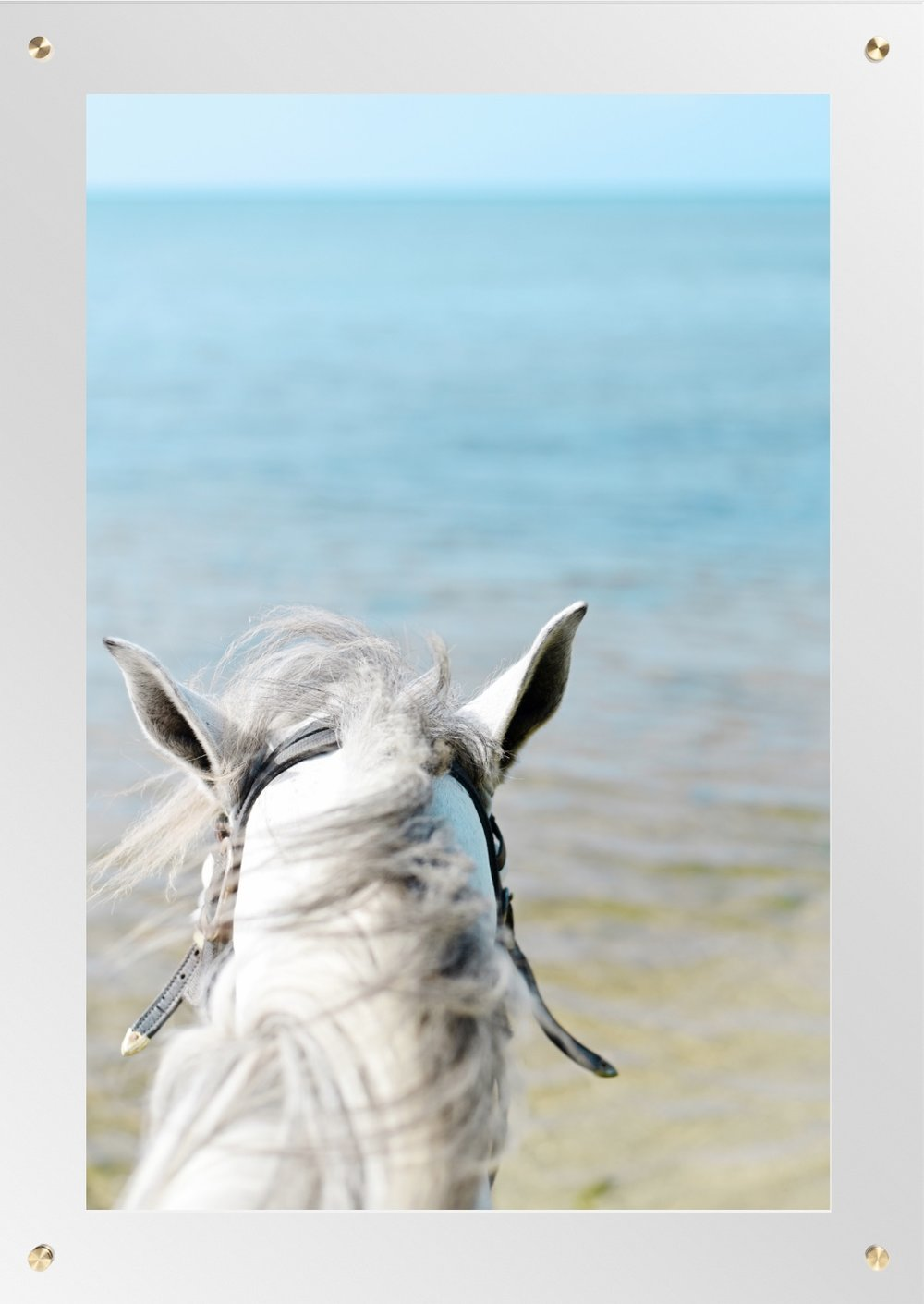 "HONDURAS HORSE 30"" X 42"" ACRYLIC & BRASS $750"