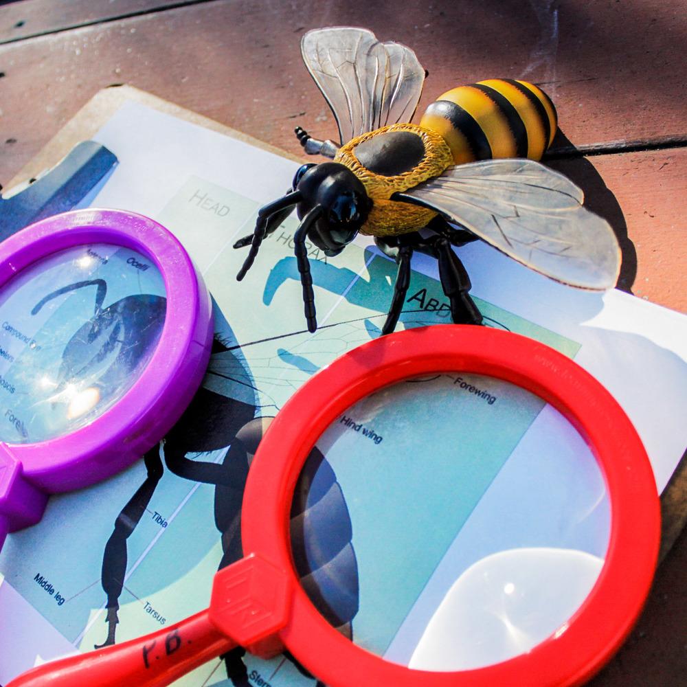 Planet Bee Learning.jpg
