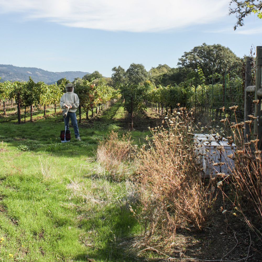 Planet Bee sets up hives in wine country.jpg