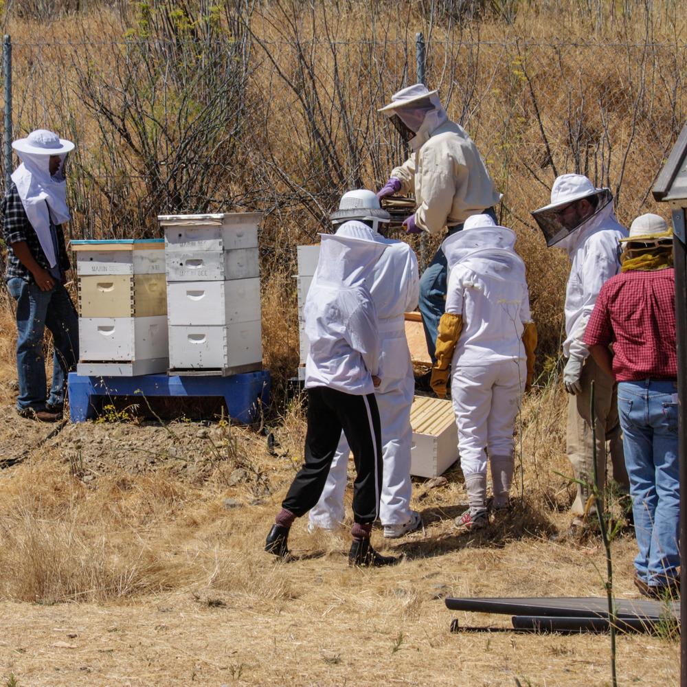 Planet Bee free community workshop.jpg