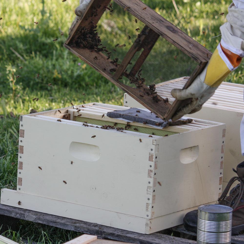Planet Bee installing bees.jpg