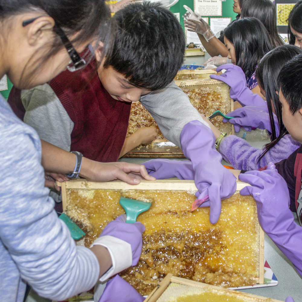 Planet Bee Students Scraping Honey From Frames.jpg