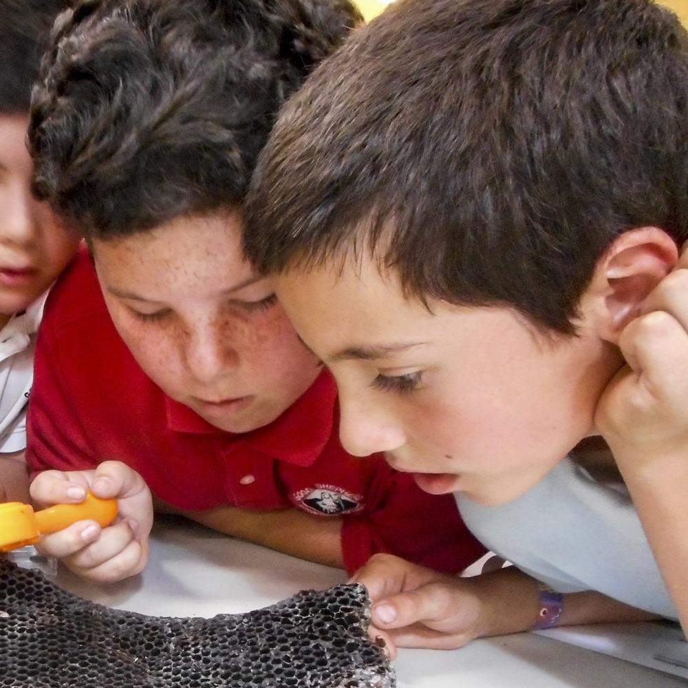 Planet Bee Students Exam Honeycomb.jpg