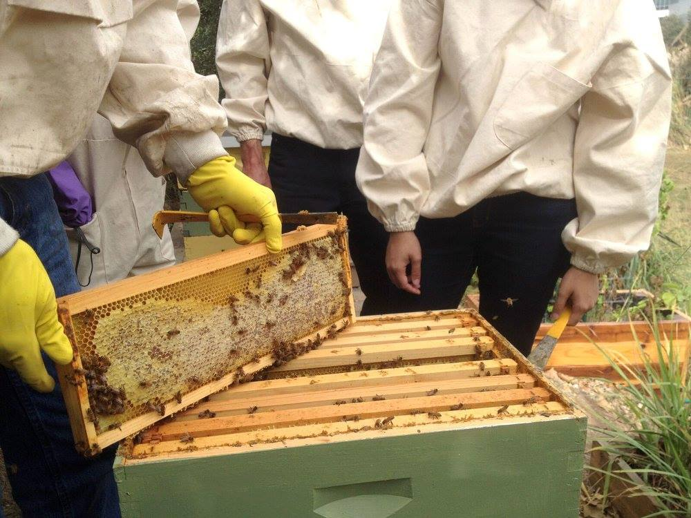 Genetically modified Bees? This tech. could keep hives safe from diseases. Tell us what you think!