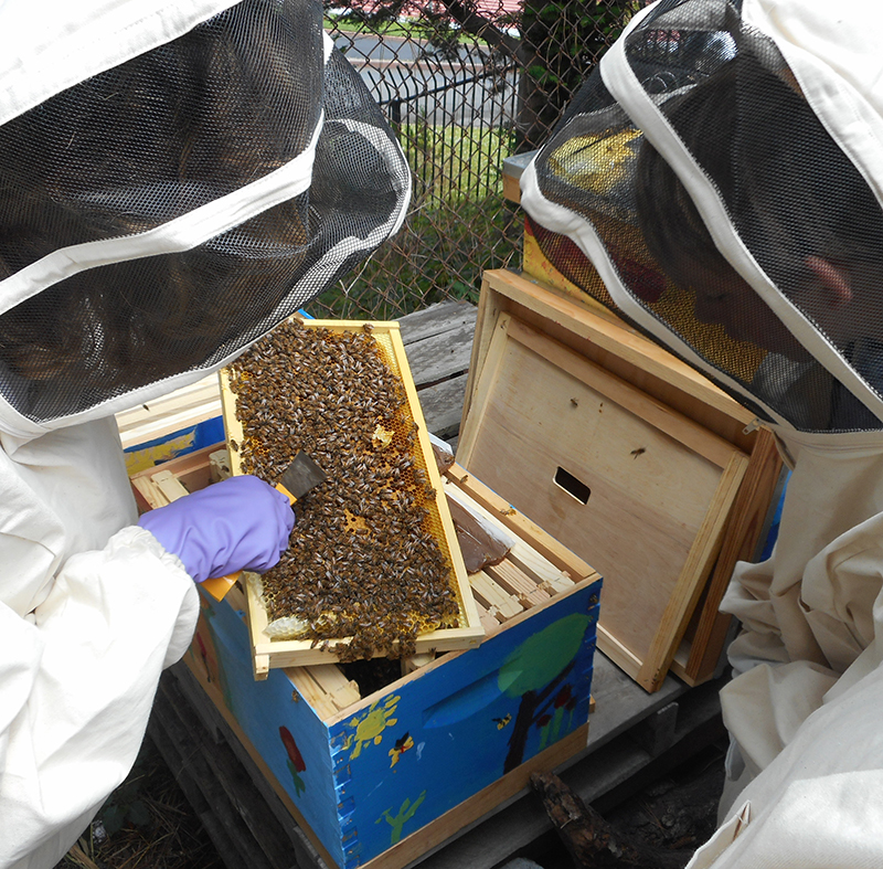 Planet Bee student looks inside a beehive.jpg