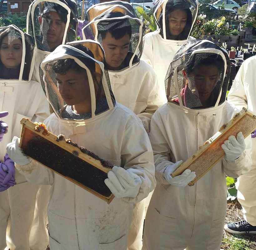 Planet Bee_high school students example bee hive.png
