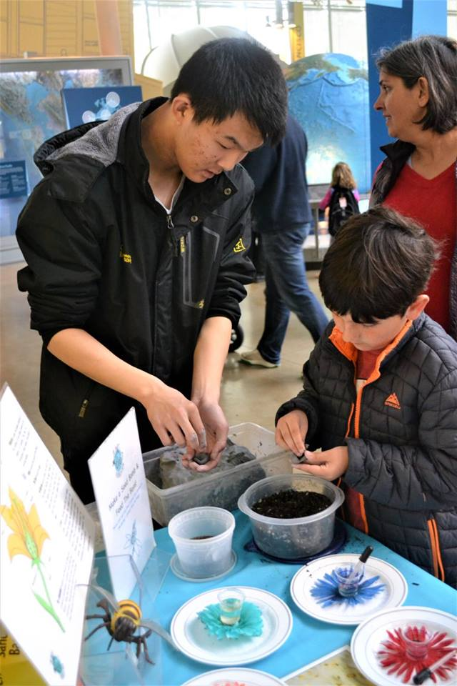 Michael teaches a child how to make seed balls at Cal Academy's Pollinator Festival