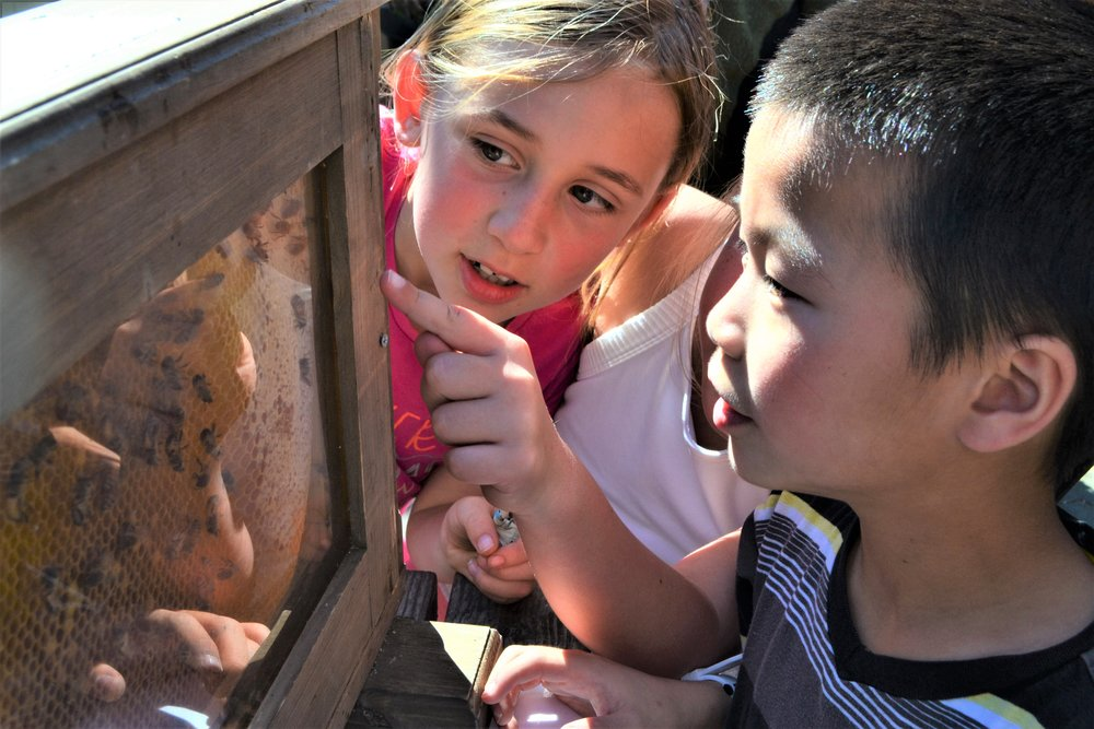 Students examine our observation hive of live bees during our Humble Honey Bee lesson