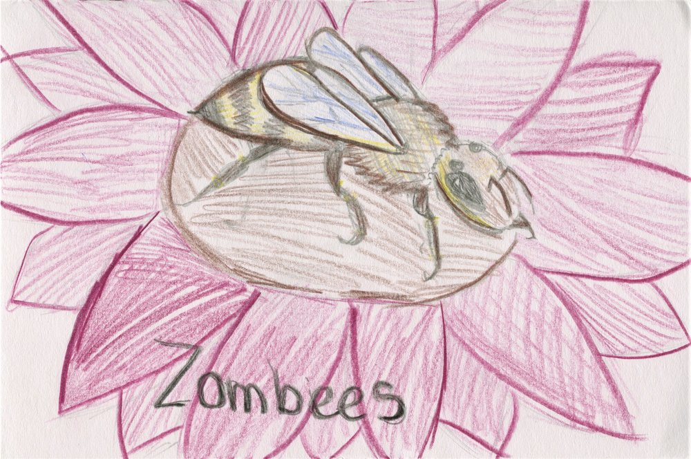 Planet Bee Foundation ZomBees