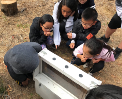 Inquisitive students at Visitacion Valley Middle School witness first hand what life in the hive is like in our observation hive.