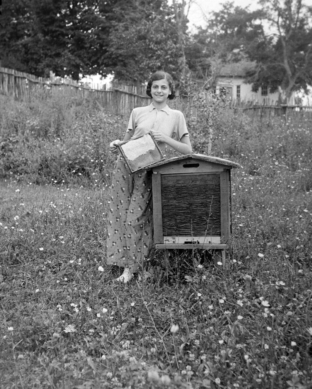 A young beekeeper holds up a honey frame, circa 1935.
