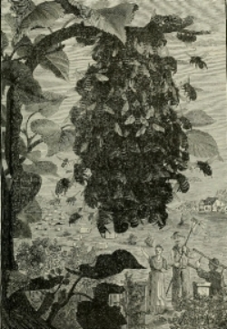 A depiction of a swarm of bees gathered on a tree branch with farmers pictured below.