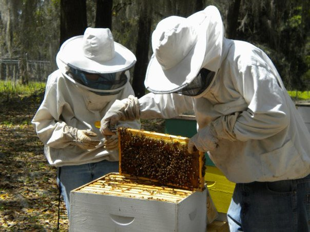Everything you need to know   before   you get started beekeeping! Already started? Don't worry there is plenty for you too!