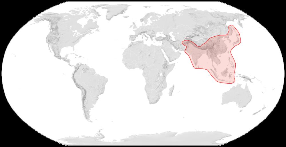 Apis Cerana  Distribution Map