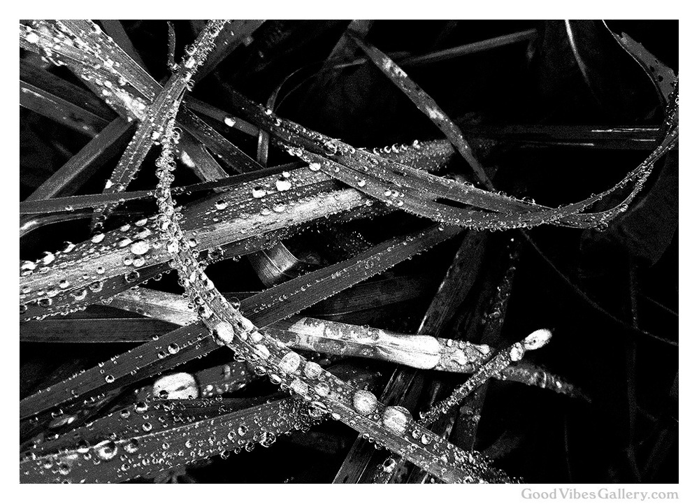 black-and-white-photography-bnw-bw-photos-monochrome-zen-tao-art-nature-abstract-abstract-blade-of-grass-water-rain-fall-autumn-foliage-simple-pleasures-simplicity-goodvibesgallery-good-vibes-gallery