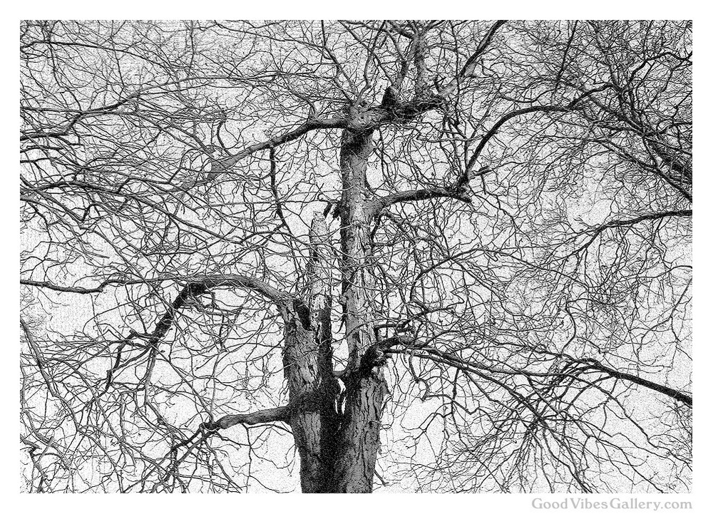 black-and-white-photography-bnw-bw-photos-monochrome-zen-tao-art-nature-abstractions-abstract-trees-tree-leaves-fall-autumn-foliage-entangled-goodvibesgallery-good-vibes-gallery