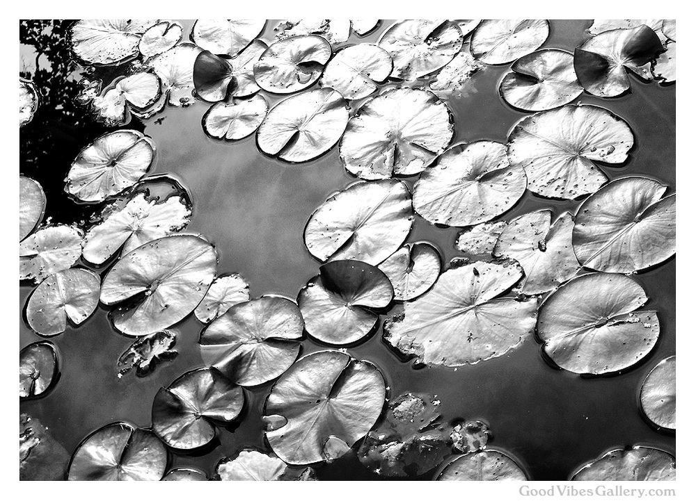black-and-white-photography-bnw-bw-photos-monochrome-zen-tao-art-nature-abstract-abstractions-lotus-pad-water-lillies-claude-monet-goodvibesgallery-good-vibes-gallery