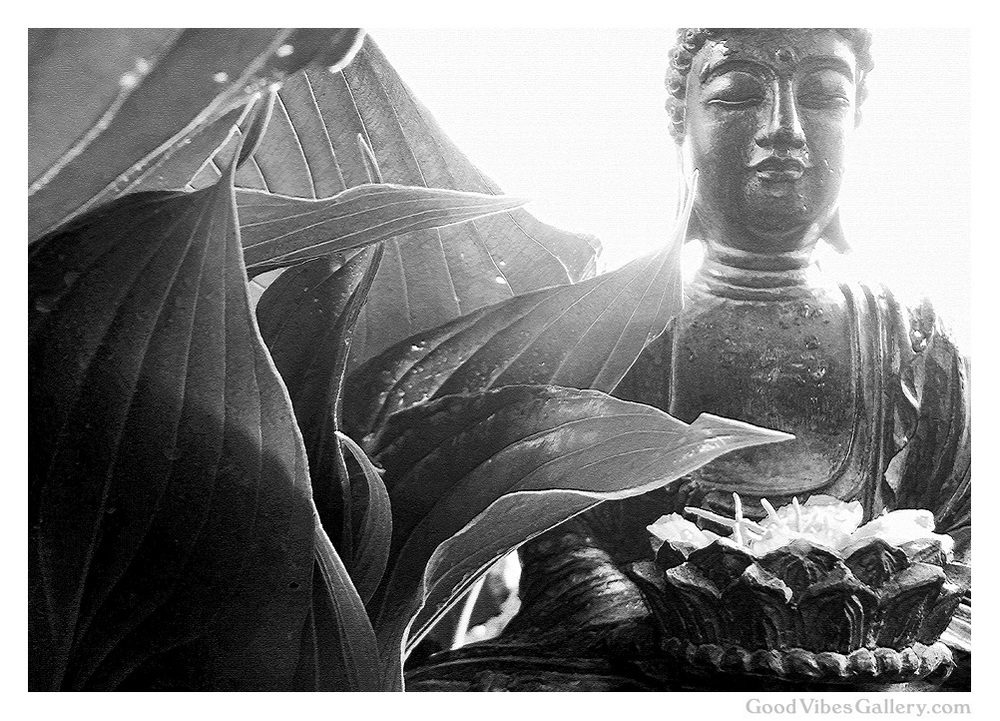 black-and-white-photography-bnw-bw-photos-monochrome-zen-tao-art-nature-buddha-budha-leaves-plants-light-yin-&-yang-goodvibesgallery-good-vibes-gallery