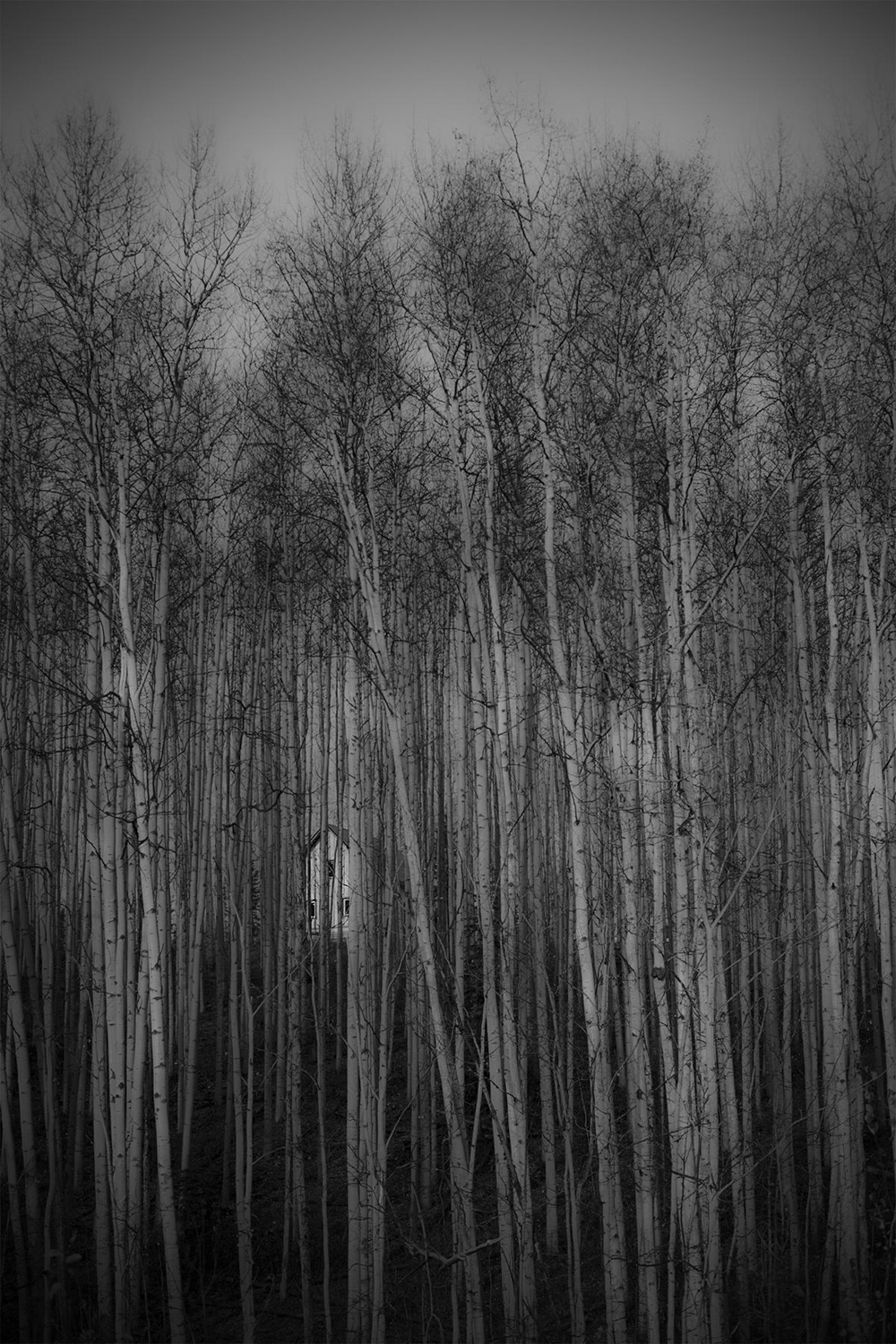"""House in the Birch Forest""          Kaitlin Wilson, Fairbanks           Best of Show"