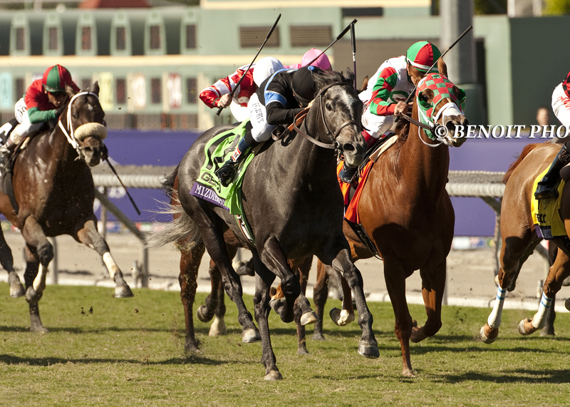 Mizdirection  winning the  G1 Breeders Cup Filly and Mare Turf Sprin t for the consecutive time in 2013.  Photo taken by Benoit Photography