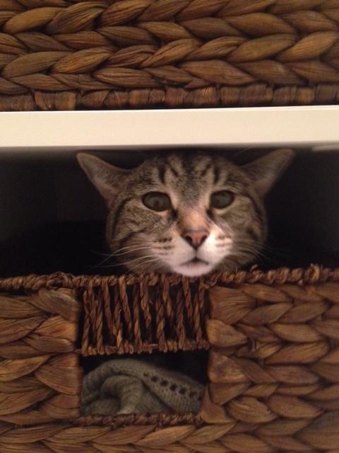 Cat house basket-Sadie Road