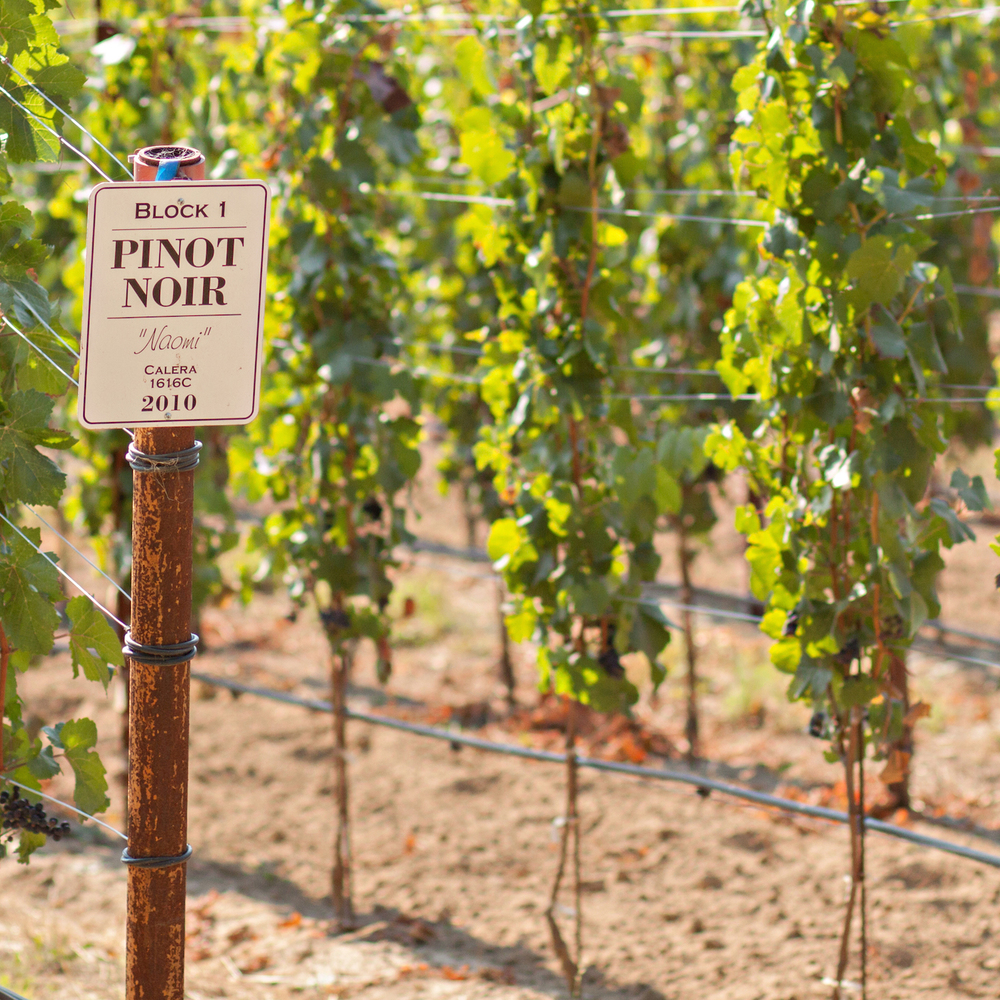PinotNoir_GantzFamilyVineyards.jpg