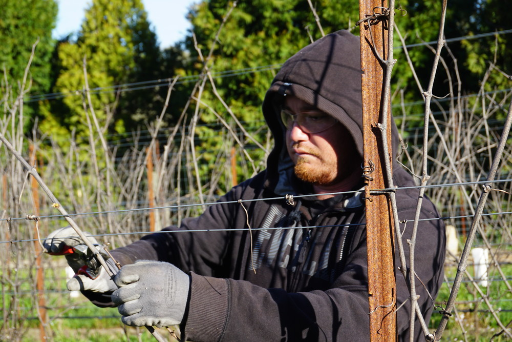 Pruning_GantzFamilyVineyards.jpg